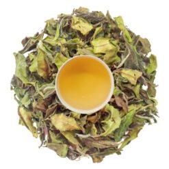 first flush white tea